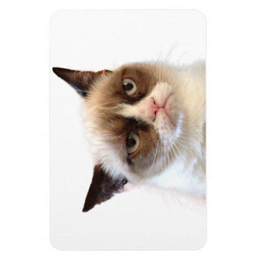 grumpy cat книга